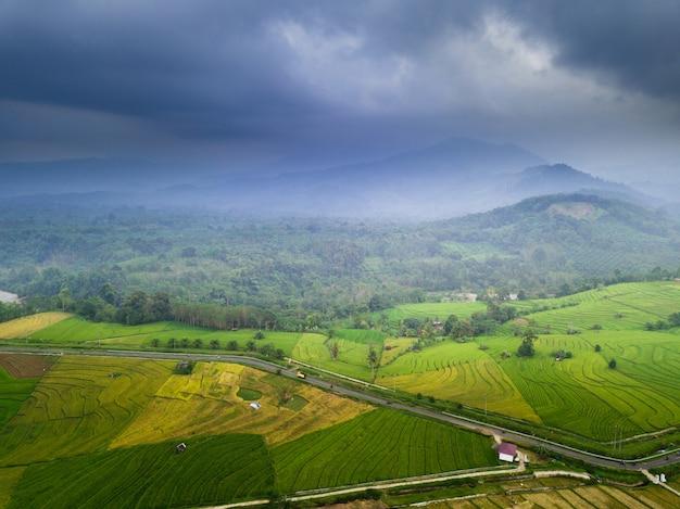 Travel destination in asia beauty rice fields in north bengkulu Premium Photo
