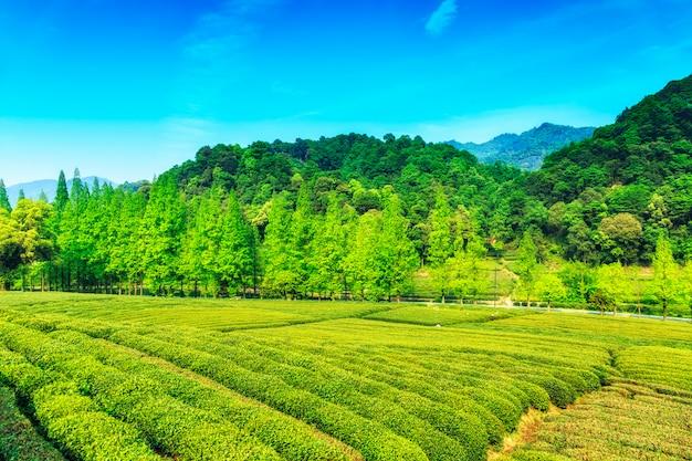 Travel picking tourism scenery farmer Free Photo