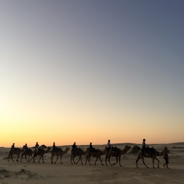 Travel sand indian rajasthan adventure Free Photo