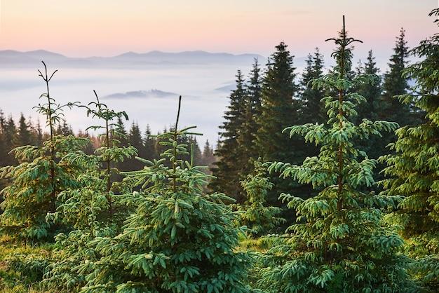 旅行、トレッキング。夏の風景-山、緑の草、木、青い空。 無料写真