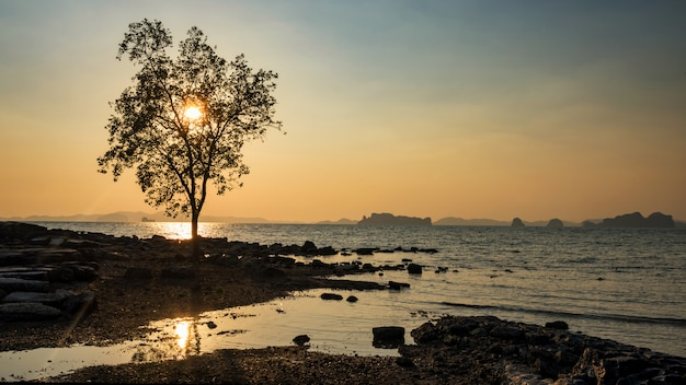 Tree against sunset at beach, krabi Premium Photo