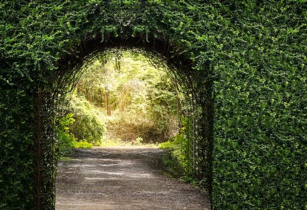 Tree arch door entrance Premium Photo