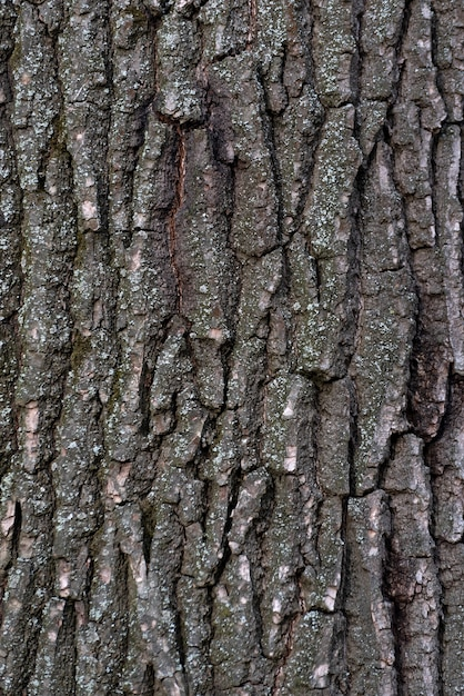 Tree bark close up. abstract background. rough textured surface. vertical frame Premium Photo