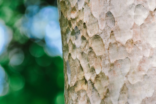 Tree bark in forest nature background Premium Photo