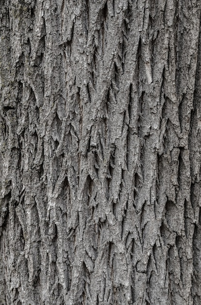 Tree bark texture texture for background. Premium Photo