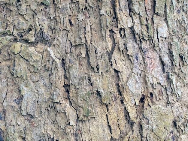 Tree bark texture Premium Photo