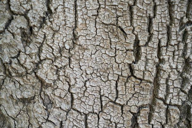Tree bark with cracks Free Photo