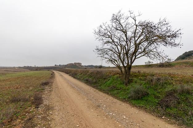 Tree beside a rural road Premium Photo