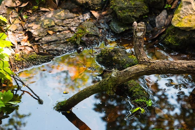 Ветвь дерева в воде Бесплатные Фотографии