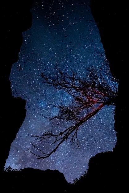 Tree branch with night sky Premium Photo