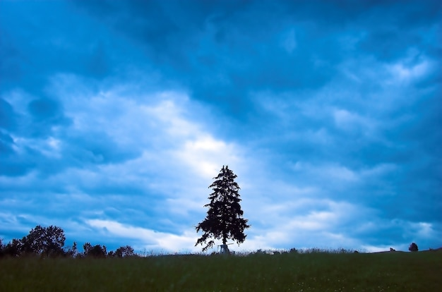 Tree on cloudy day Free Photo