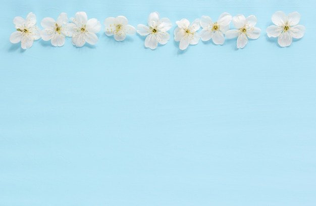 Tree flowers border on blue background. spring blooming Premium Photo
