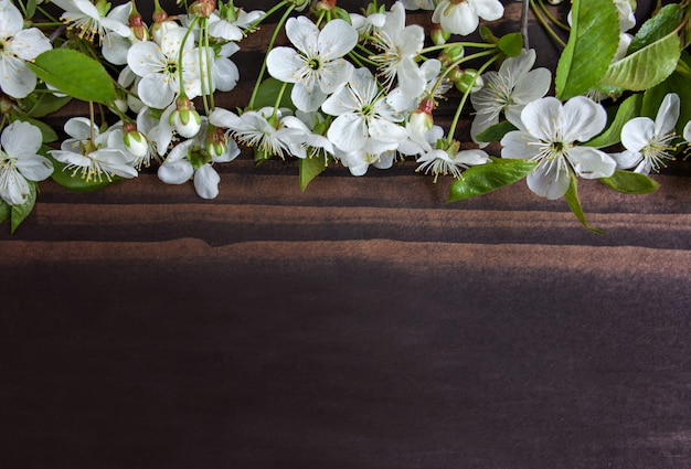 Tree flowers border on wooden background. spring blooming Premium Photo