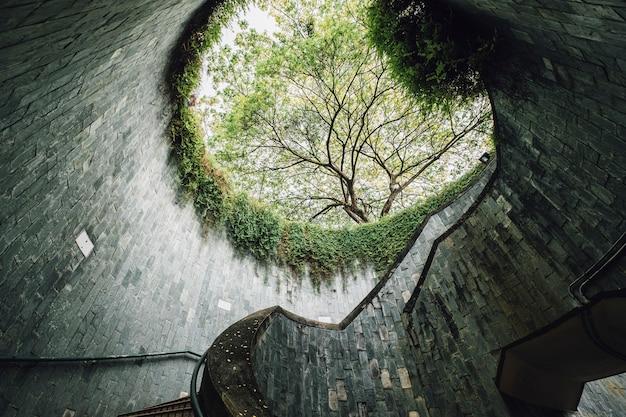 Tree at fort canning landmark, singapore Free Photo