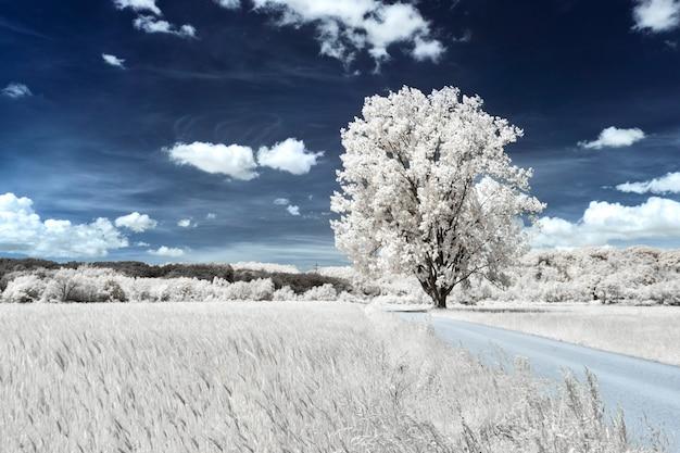 Albero in un campo erboso vicino a un campo di grano sotto il bel cielo nuvoloso Foto Gratuite