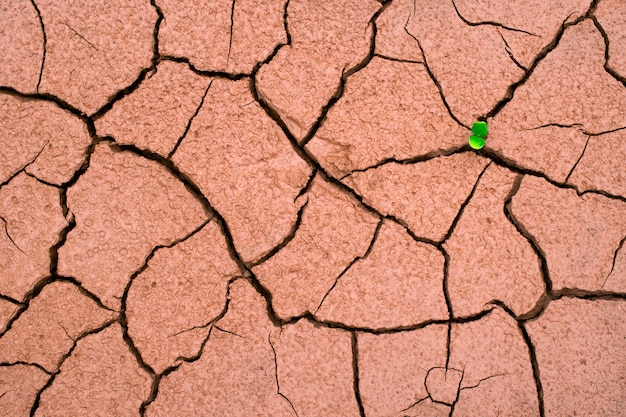 A tree growing on crack dried soil  ground in drought, affected of global warming made climate change. water shortage and drought concept. Premium Photo