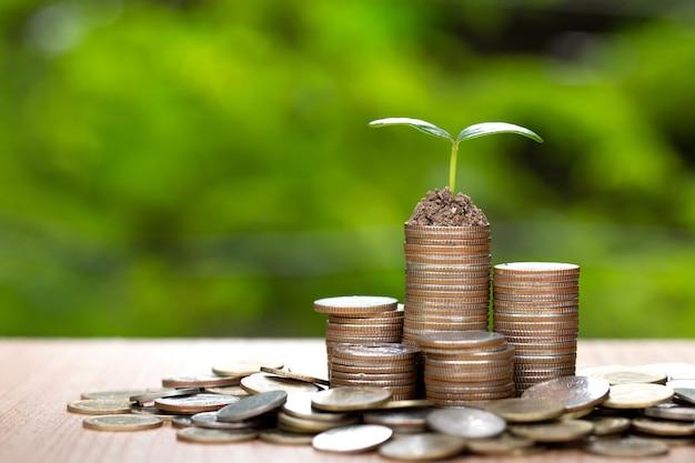 Tree growing on pile of coins money. Premium Photo