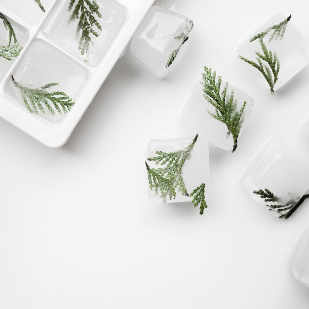 Tree needles in ice cubes and tray Free Photo