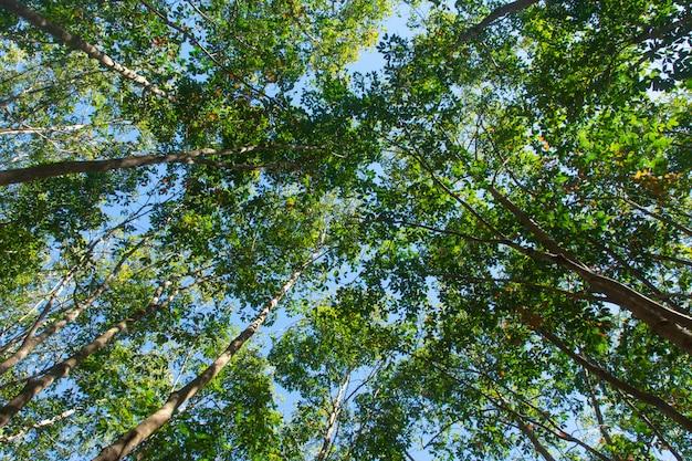 Tree plantation Premium Photo