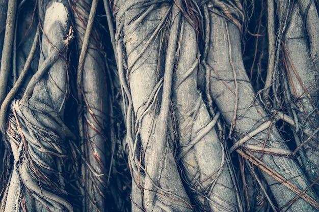 Tree roots Premium Photo