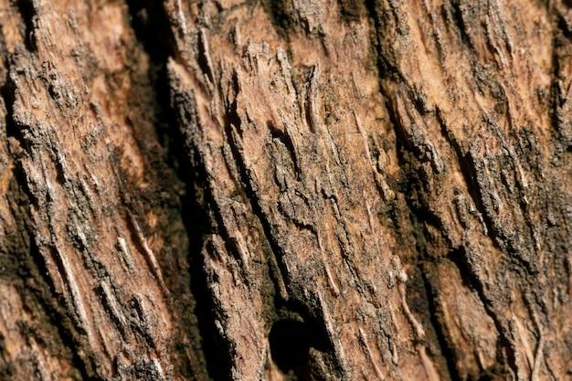 나무 껍질 근접 유기 배경 프리미엄 사진