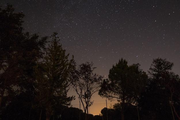 밤 동안 별이 빛나는 하늘 아래 나무 실루엣 무료 사진