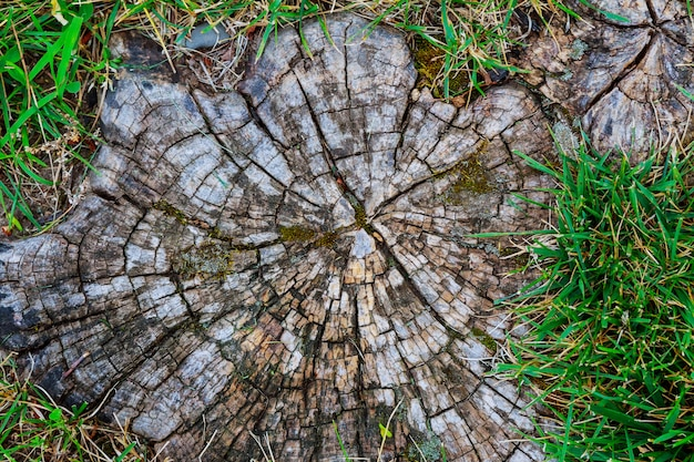 Tree stump on the green grass top view Premium Photo