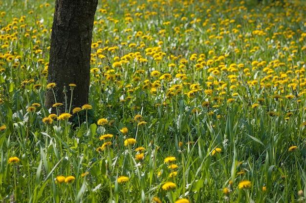 いくつかの黄色い花に囲まれた木 無料写真