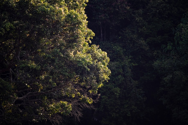 Tree in tropical forest Premium Photo