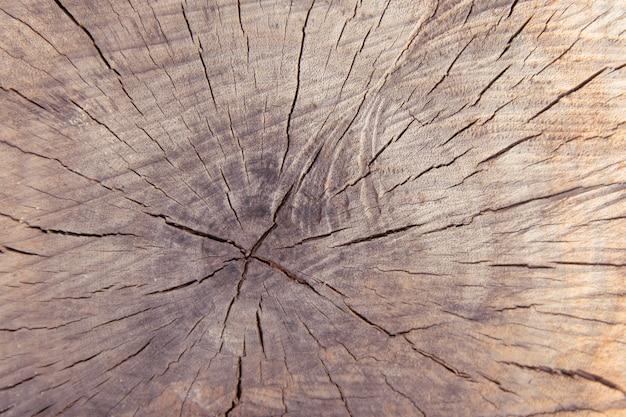 Tree trunk stump texture background top view. Premium Photo