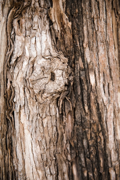 Tree trunk texture close up Free Photo