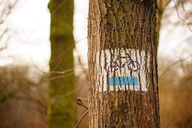 Ствол дерева с нарисованным на нем велосипедом Бесплатные Фотографии