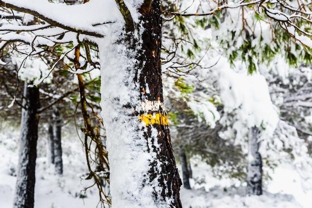 Ствол дерева с указателями направления заснеженной пешеходной тропы. Premium Фотографии