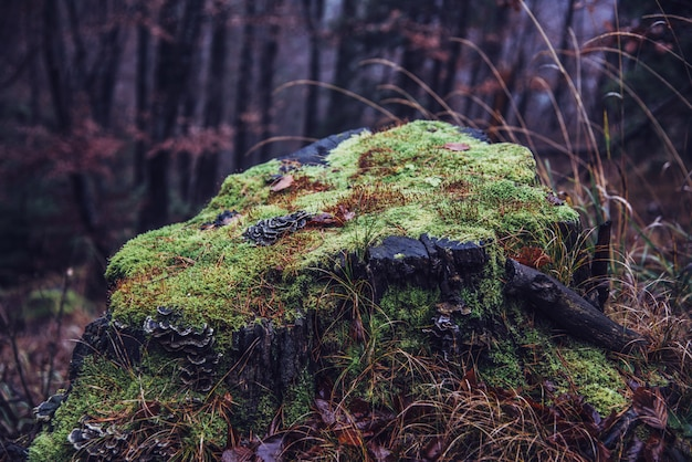 Tree trunk with moss in the forest Free Photo