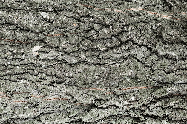 Tree trunk wood background in grey shades Free Photo