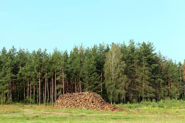 수확하는 동안 함께 쌓인 나무 줄기. 백그라운드에서 여름, 숲과 푸른 하늘 동안 사진 프리미엄 사진
