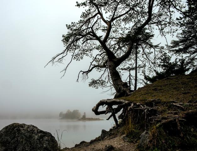 ツークシュピッツェ湖とアイプゼーの霧の空の木 無料写真