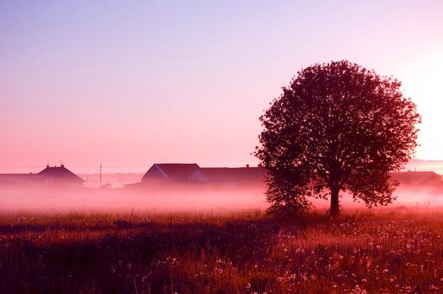 Tree with fog Free Photo