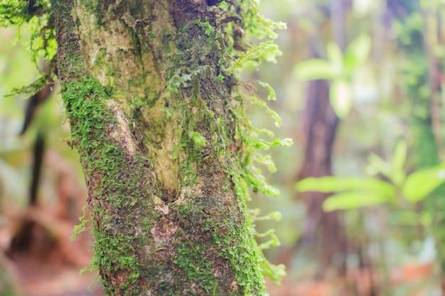 緑の森の樹皮のコケや木の幹のコケの木 Premium写真
