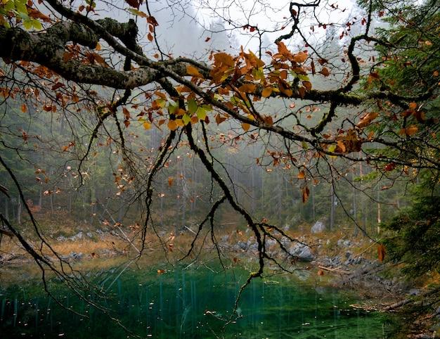 Albero con foglie d'arancio e un lago zugspitze a eibsee Foto Gratuite