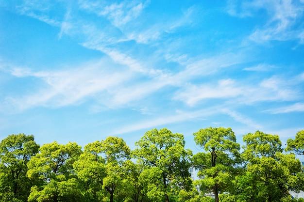 나무 무료 사진