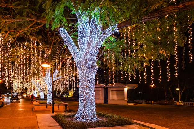 The trees are decorated with light bulb, normal shoot and defocused Premium Photo