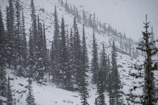 Alberi coperti di neve Foto Gratuite
