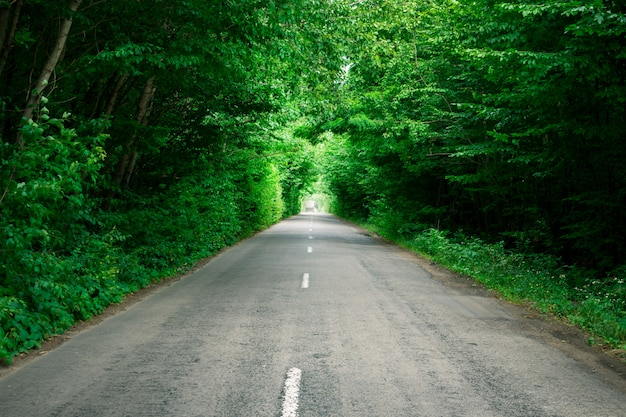 Trees create an artificial tunnel over the road. beautiful landscape Premium Photo