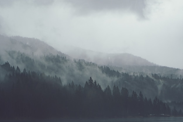 Trees next to each other in the forest covered by the creeping mist Free Photo
