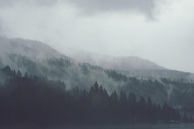 Alberi uno accanto all'altro nella foresta coperti dalla nebbia strisciante Foto Gratuite