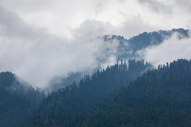 Trees in the fog Premium Photo