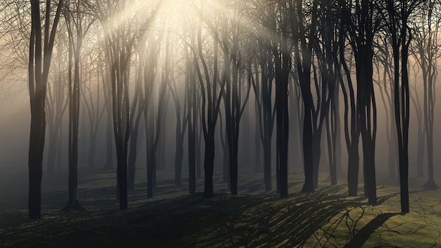 Trees on a foggy day Free Photo