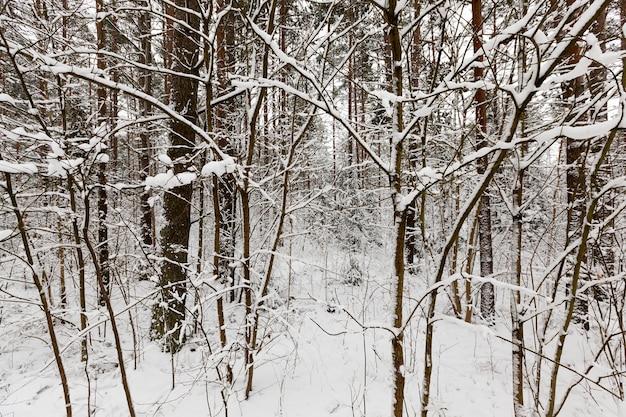 冬季には森や公園に生える木々。すべてが雪で覆われています。凍るような曇りの日 Premium写真