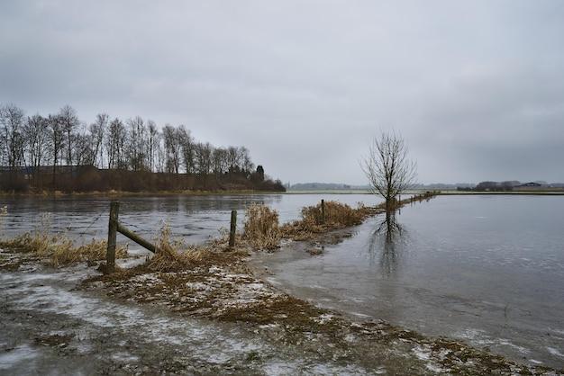 湖の近くに生え、水に映る木々 無料写真